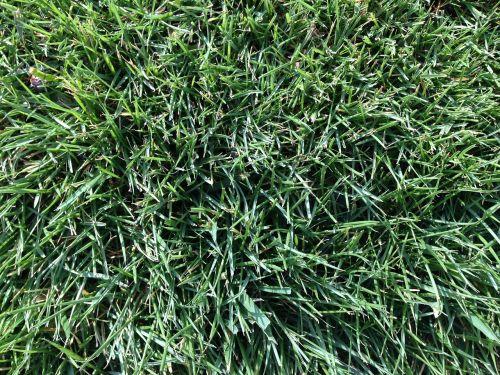žolė,laukas,futbolas,veja,žalias,gamta,natūralus,pieva,žolės laukas,velėna,Sportas,augalas,futbolo aikštelė,kiemas,saulė,augimas,amerikietiškas futbolo laukas,žalia žolė,žalias laukas,tekstūra