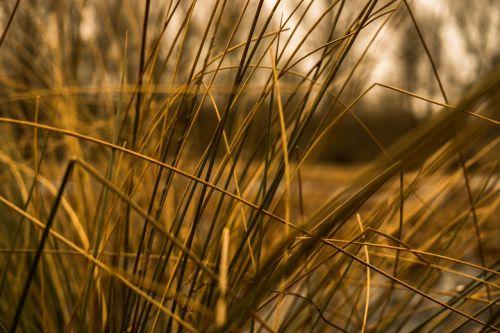 žolės,Halme,stiebas,Uždaryti,žolės žolės,gamta,ruduo,makro,tvenkiniai žolės,flora,supine žolė,augalas,pavasaris,vamzdis,variklis,oranžinė,nuotaika,atmosfera