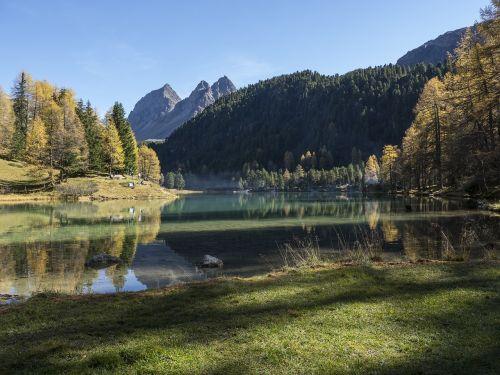 graubünden,palpuognasee,lai di rapid,Šveicarija,šventė,rudens šventės,atsigavimas,tylus,ruduo,kritimo spalva,maumedis,aukso ruduo,kraštovaizdis,rudens miškas,nuotaika,poilsis,ežeras,Bergsee,smaragdo žalia,aukso geltona,saulėtas,aišku,šešėliai,veidrodis,kalnai,dvyniai,dūmai,židinys,žygis,takas