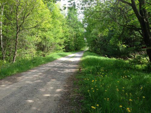 žvyro kelias,kelias,gamta,šešėliai,kraštovaizdis,žalias,lauke,vasara,miškas,kelias,Šalis,gražus,peizažas,kelias,kaimas