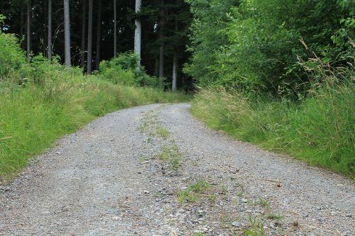 žvyro kelias,miško takas,toli,akmenukas,miškas,gamta,žvyras,žalias,purvo kelias,Promenada,komercinis kelias