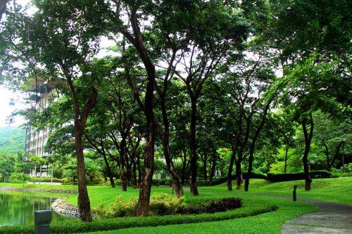 kraštovaizdis, medžiai, žalias, žolė, lapai, miškas, lagaminai, sodas, žalias