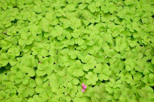 žalias,dobilas,sėkmė,režimas