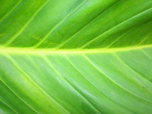 žalias,žalias lapas,medis,pavasaris,žievė,įspūdingas,augalas,iš prigimties,natūralus