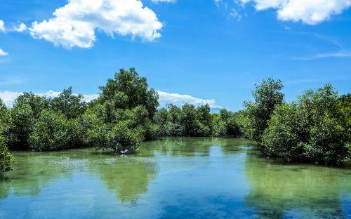 žalias,mangroviai,gamta,miškas,medis,augalas,lauke,kelionė,kraštovaizdis,natūralus,lapai,atogrąžų,vanduo,turizmas,laukas,dangus,kelias,jūra
