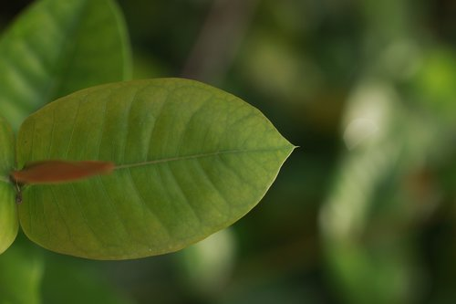žalias, pobūdį, žali lapai, Palma, Sodas, augalas žalias, filialas, augmenija, miškas