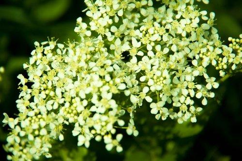 žalias, gėlė, laukas, pobūdį, gėlės, Sodas, augalų, žali lapai, augalas žalias