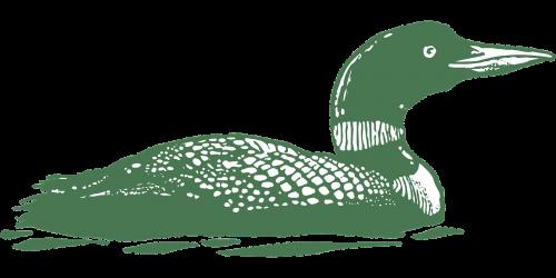 žalias,paukštis,vandens paukščiai,maudytis,vanduo,antis,žąsis,eskizas,piešimas,laukinė gamta,ežeras,tvenkinys,vienas,vienišas,vienas,vienas,nemokama vektorinė grafika