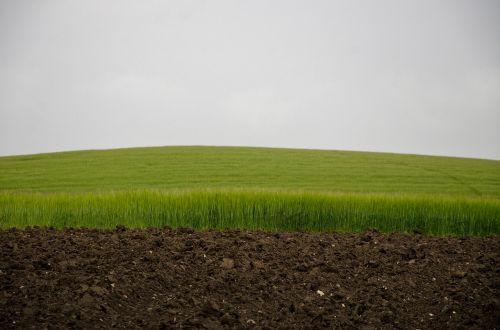 žalias laukas,dangus ir laukas,žali kviečiai,rugių laukas,laukas ir dangus,fonas,pavasaris,žalias,augalai,gamta,augalas,vasaros pieva,varlė