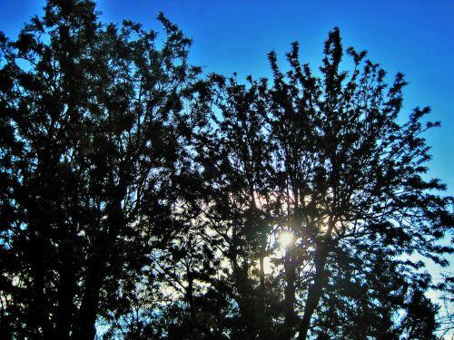 žalia lapija,lapai,medis,žalias,lapija,šviesa,šviesus,saulė