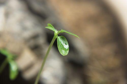 žalias lapas,vandens lašai,šviežias,žalia augalai,žalias,augalas