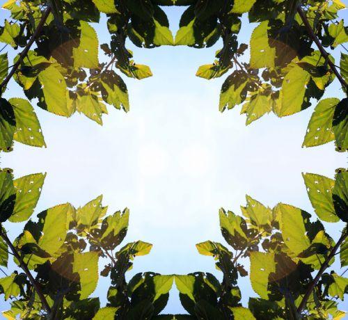 kvadratas, įrėminti, deimantas, lapai, žalia lapų rėmas