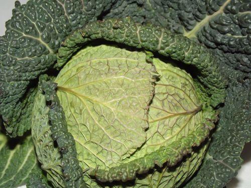 žalias, lapinės, kopūstai, žalios lapinės kopūstų (02)