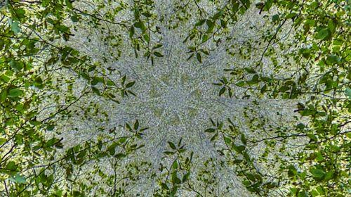 fonas, tapetai, žalias, augalas, augalai, lapai, lapai, lapinės, žaliosios lapinės vynmedžių kaleidoskopas