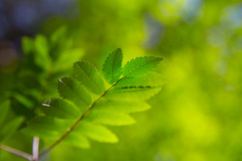 lapai, lapai, gamta, natūralus, vasara, oras, sezonai, žalias, tekstūra, augalas, žali lapai
