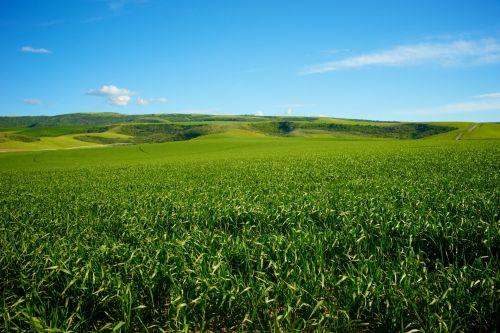 Žemdirbystė, duona & nbsp, krepšelis, ūkis, ūkininkavimas, žemės ūkio paskirties žemė, maistas, puiki & nbsp, lyguma, žalias, midwest, augalai, ranča, ranch & nbsp, žemė, dangus, vasara, išlaikymas, žalia vidurio vakarų žemės ūkio paskirties žemė