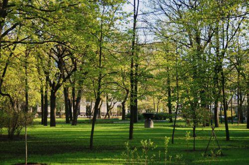 parkas, medžiai, veja, taikus, žalias, Žalioji parkas St Peterburge