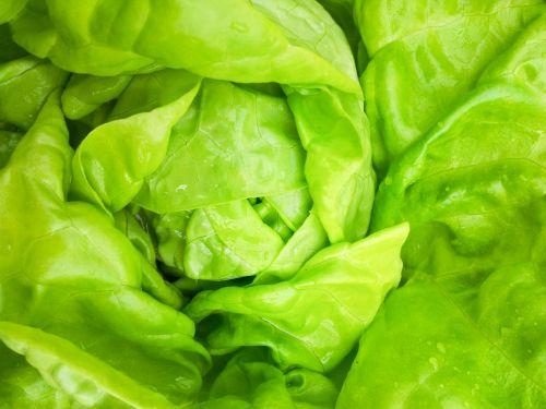 fonas, Iš arti, maistas, šviežias, sodas, žalias, sveikas, lapai, salotos, makro, gamta, mityba, ekologiškas, augalas, pagaminti, salotos, salotos, daržovių, daržovės, vegetariškas, žalia salotos augalų detalės