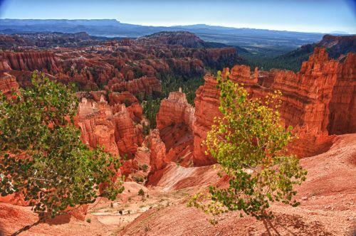 Bryce, Bryce & nbsp, kanjonas, Bryce & nbsp, kanjonas & nbsp, nacionalinis & nbsp, parkas, kanjonas & nbsp, žemė, kanjonai, uolos, atstumas, erozija, geologija, auksinis, aukštumas, hoodoos, nacionalinis & nbsp, parkas, natūralus, atviras, oranžinė, nepastebėti, panorama, panoraminis, roko & nbsp, susivienijimai, vaizdingas, vaizdingas & nbsp, pamiršti, aukštas, želdynai ant uolos krašto