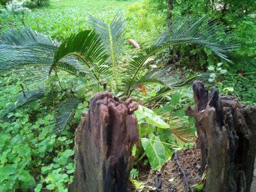 gražus, žaluma, augalai, nyksta, medis, bagažinė, žaluma, medžio kamienas