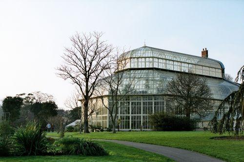 šiltnamyje,botanikos sodai,botanikos,konservatorija,gamta,orientyras,Dublino botanikos sodai,turizmas,šiltnamio