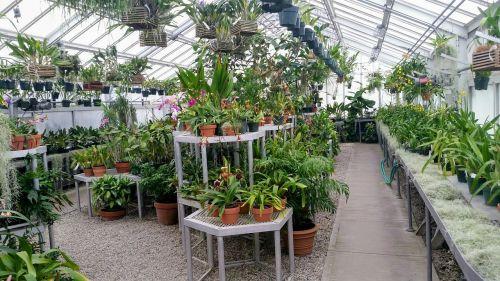 šiltnamyje,patalpose,žaliasis namas,augalai,augalas,gėlės,orchidėjos,išjungti tinklą,tvarumas,aplinkosauga,aplinka,gamta,sodas,sodininkystė,konservatorija,botanika,sodininkystė,augimas,patalpose,stiklas,žalias,žaluma,miesto ūkininkavimas,miesto,ūkininkavimas,auga,eco,ekologiškas,kunigaikščių ūkiai