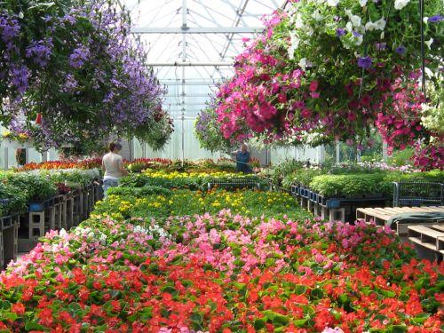 vasara, šiltnamyje, augalai, gėlės, verslas, natūralus, ekologiškas, gražus, sodininkystė, sodinti, šiltnamyje vasarą