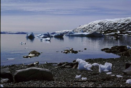 Grenlandija, Saulė, Vidurnaktis, Įlanka, Ledkalnis