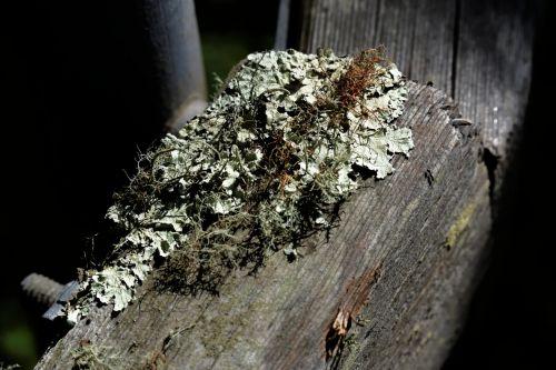 augimas, atkaklumas, žalias, grybelis, medinis, tvora, augalas, augimas ant tvoros posto