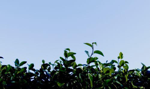 augimas, metafora, apsidraudimas, žalias, dangus, mėlynas, augimas