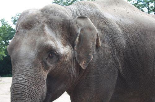 hagen beck zoologijos sode,Hagenbeck,zoologijos sodas,hamburgas,gyvūnas,gamta,gyvūnų pasaulis,zoologijos sodas gyvūnas,dramblys