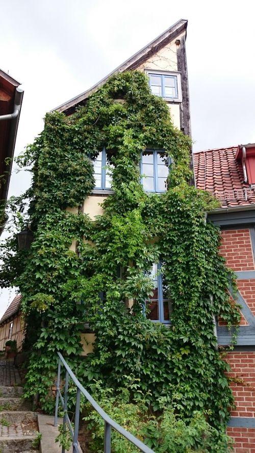 pusiaukelėje,Quedlinburg,ivy fachwerkhaus
