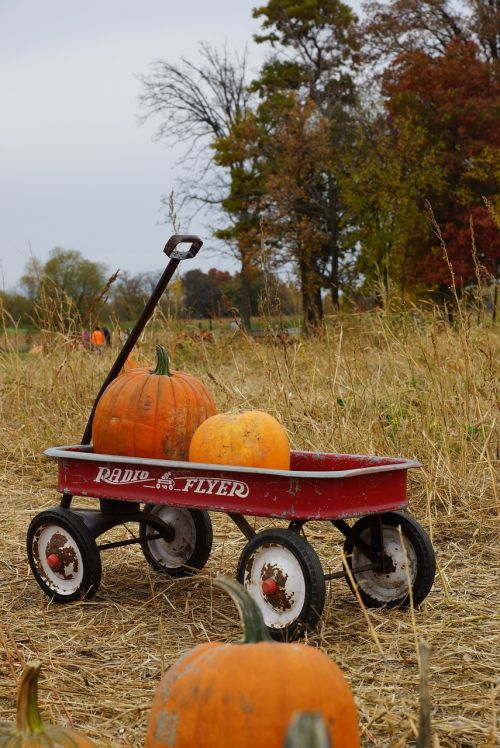 Halloween,moliūgo pleistras,moliūgai,ūkis,Spalio mėn,gamta,pleistras,ruduo,šventė,kritimas,ekologiškas