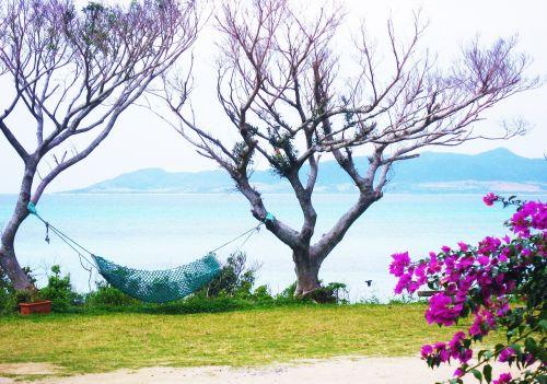 hamakas,Bugenvilija,Ishigaki sala,atokios salos,gėlės,raudona violetinė,rožinis,violetinė,žalias,jūra,kitoje pusėje,shiba,Okinawa,Japonija,pietų sala,šviežias,gyvas,kontrastas,antomasako,pietų šalyse,raudona,tvirtas,Moteris