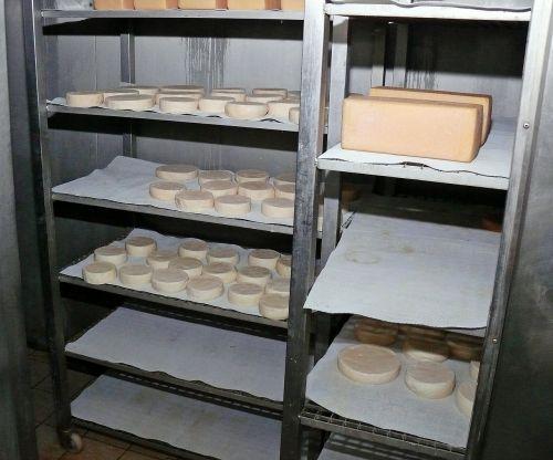 kietas sūris,sūris,skanus,esminis,frisch,jause,žalio pieno sūris,naudos iš,karvės pieno sūris,valgyti,maistas