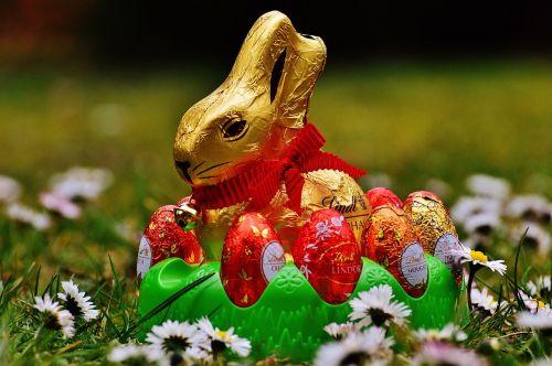 Kiškis, Velykos, Šokoladas, Pavasario Pieva, Laukinės Vasaros Spalvos, Mėlynas, Gėlės, Pavasaris, Gėlė, Pieva, Gėlių Pieva, Augalas, Gamta, Vasara, Žolė, Vasaros Pieva, Kiaušinis