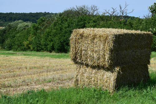 derlius,šiaudai,derlius,Žemdirbystė,vasara,šiaudai,kraštovaizdis,kiškis,gamta,galvijų pašarai,grūdai,auksinis,sausas,šieno ryšulius,rugių laukas,kukurūzų laukas,laukas,derliaus metas,šiaudų derlius,darbas