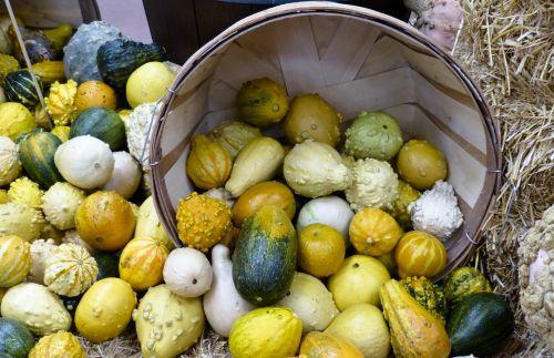 gausa, išdėstymas, ruduo, fonas, krepšelis, morkos, spalvos, spalvinga, kūgis, kukurūzai, rugšvis, pasėlių, apdaila, kritimas, maistas, šviežias, vaisiai, moliūgas, vynuogės, derlius, šventė, lapai, sumaišytas, lapkritis, Spalio mėn, daug, derlius moliūgų derlius