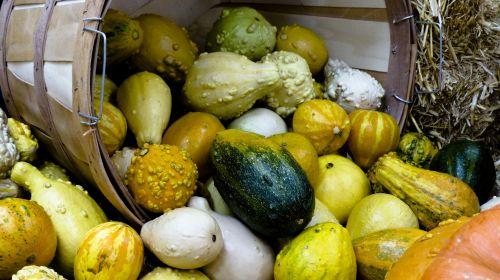 gausa, išdėstymas, ruduo, fonas, krepšelis, morkos, spalvos, spalvinga, kūgis, kukurūzai, rugšvis, pasėlių, apdaila, kritimas, maistas, šviežias, vaisiai, moliūgas, vynuogės, derlius, šventė, lapai, sumaišytas, lapkritis, Spalio mėn, senamadiškas, pipirai, plokštė, daug, derlius moliūgų derlius