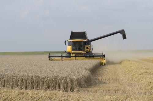 derliaus metas,Žemdirbystė,ariama žemdirbystė,derlius,žemės ūkio transporto priemonės,laukas,grūdai,kvieciai