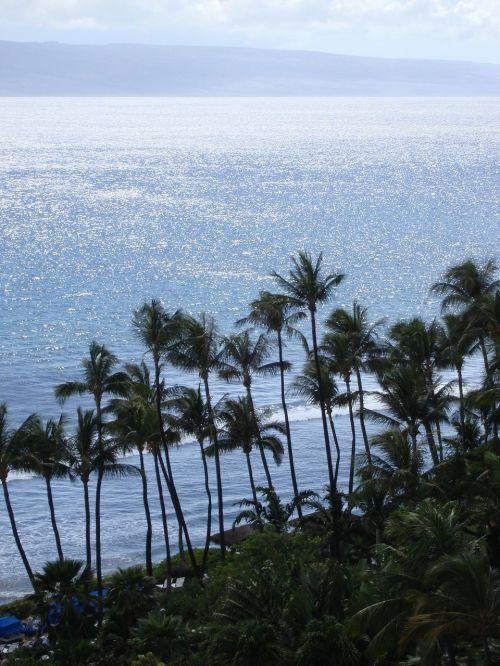 Hawaii,palmės,papludimys,nuostabus paplūdimys,delnas,sala,smėlio paplūdimys jūra