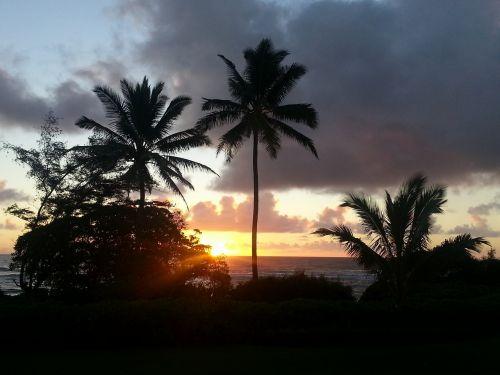 Hawaii,palmės,kauai saulėtekis,saulėlydis,kapaa saulėtekis,Havajų sala,atogrąžų saulėtekis,kauai,atogrąžų,saulėtekis,sala,vandenynas