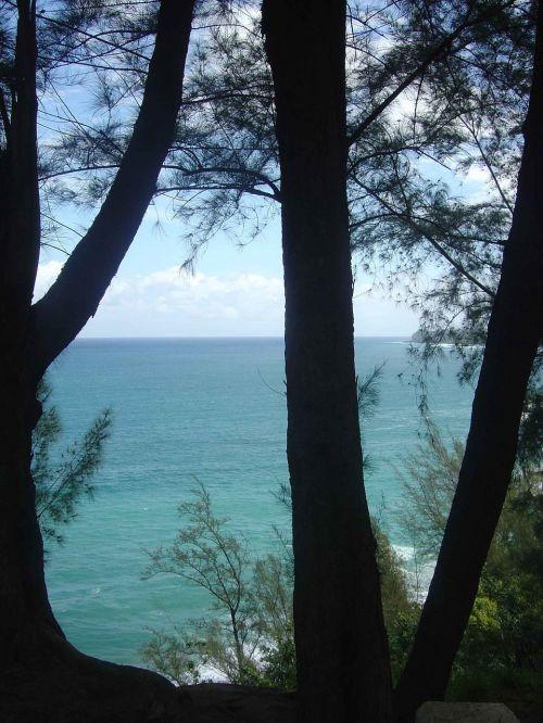 Hawaii,vandenynas,medžiai,jūra,Hawaii beach,havajų kalba,gamta