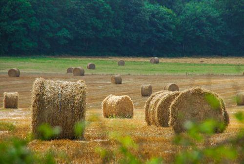 šienas, kaimo vietovė, šiaudai, ūkis, kraštovaizdis, laukas, gamta, derlius, henar, grūdai, kukurūzai, grūdai, rugiai, ūkininkas, Žemdirbystė, kvieciai, be honoraro mokesčio