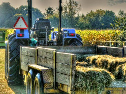 šienas & nbsp, važiuoti, šienas, traktorius, ūkis, kukurūzų laukas, ūkininkavimas, Hayride, pine & nbsp, šienas, šienas važiuoti
