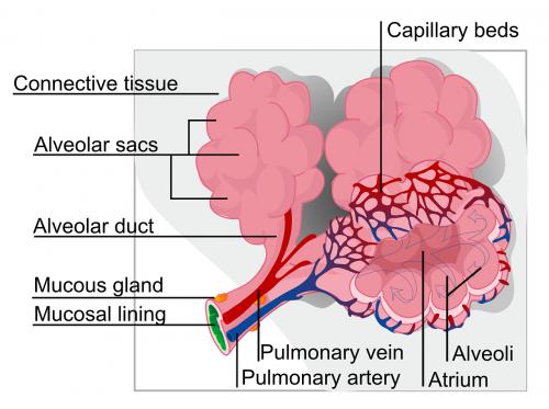 sveikata,paženklinta etikete,mokslas,ekologiškas,alveoliniai maišeliai,nemokama vektorinė grafika
