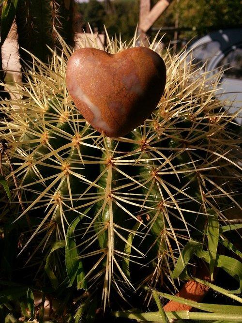 širdies, kaktusas, meilė, botanika, natūralus, dekoratyvinis