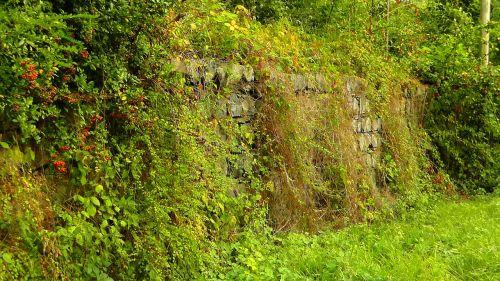 apsidraudimas,laukinis gyvatvorė,siena,akmenys,akmeninė siena,lapai,šveitimas,laukinis augimas,laukinė gėlė,laukinis pievas,gamta,žalias,augalas,žinoma,augimas,flora,frühlingsanfang
