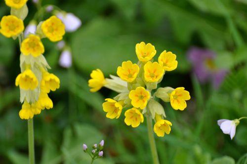 Sveiki,geltonos gėlės,Šalis,fleurs des champs,pavasaris,geltona gėlė,gėlė,sodas,gėlės,laukinės gėlės,laukas,laukinė gėlė,gamta,pavasario gėlės