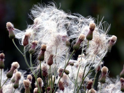 žolelės,gamta,vasara,france,gėlė,laukas,laukinės žolelės